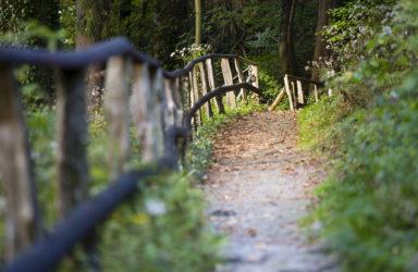 Forest Trail And Railing, Eifel